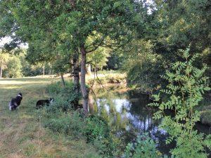 local-river